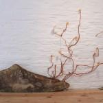 stone-&-nipple-flowers(82)