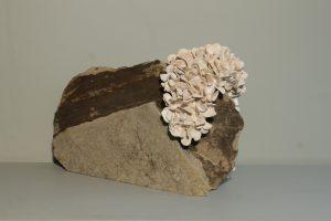 fossilised stone with fingerprints s